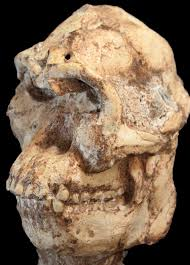 New age for Little Foot Hominid