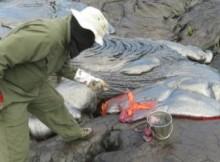 lava sample