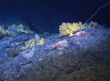 Experts come up with plan for protecting deep-sea life from mining